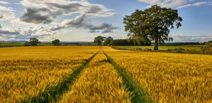 farming scotland
